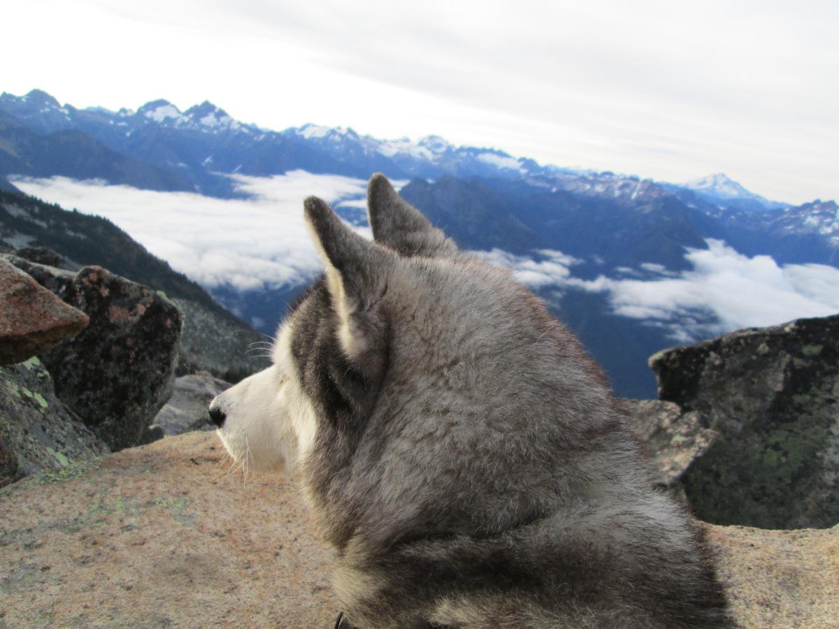 That Husky Life